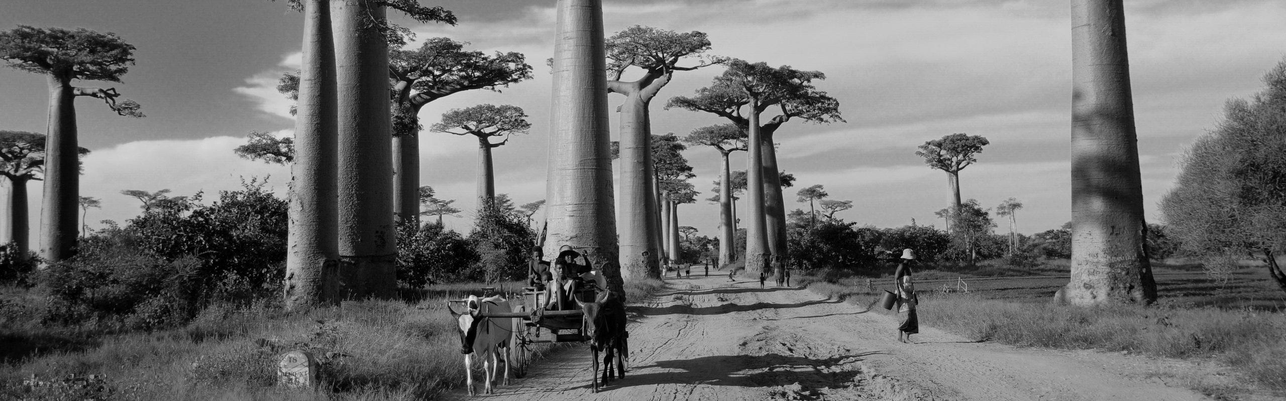 IndigoBe Madagascar